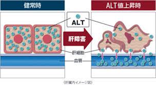 細胞が傷害を受けると 血管の中に放出されて流出することを示す図