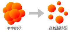 中性脂肪とそこから分離した遊離脂肪酸
