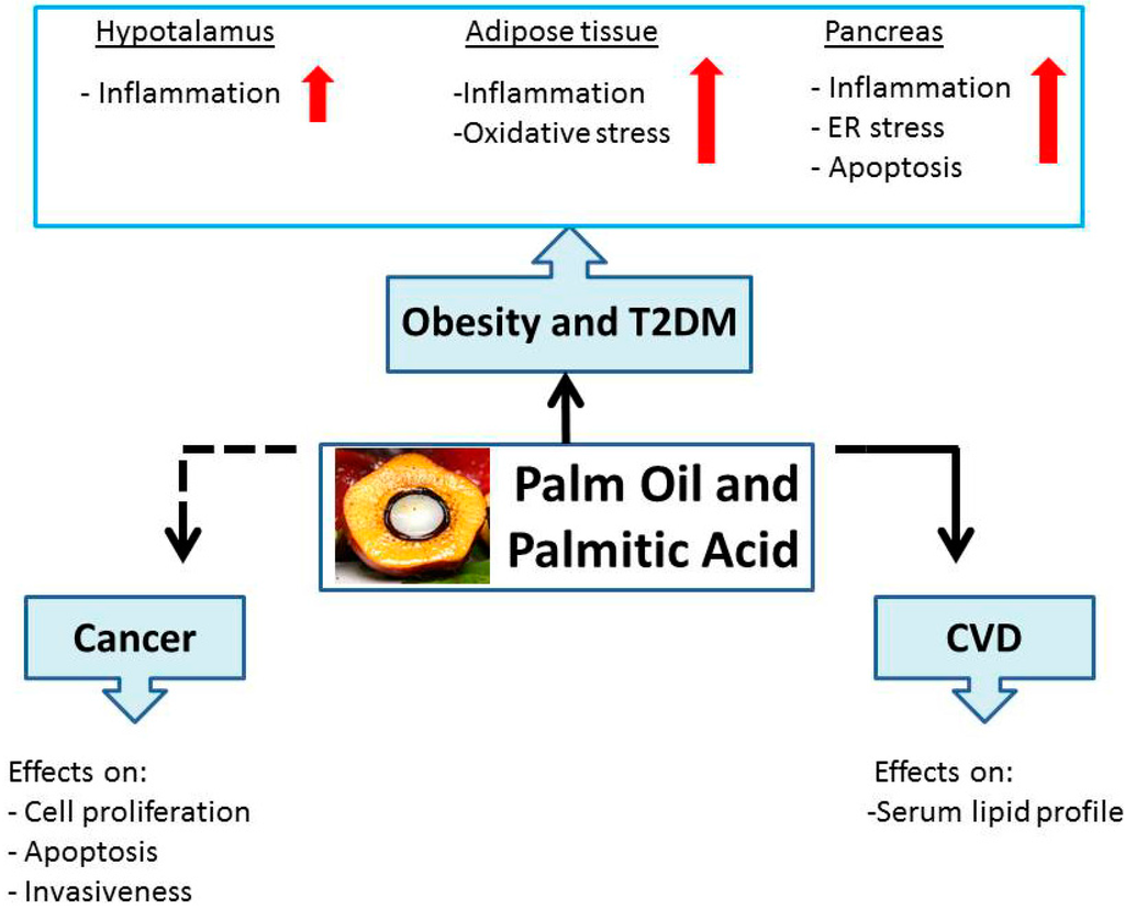 長鎖飽和脂肪酸が誘導する悪影響についてまとめた図