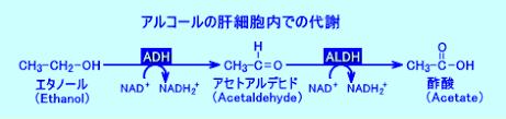 アルデヒドデヒドロゲナーゼの機能に関わることを示す図