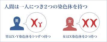 女性はX染色体を2個持ち 男性はX染色体を1個 Y染色体を1個持つことを示す図