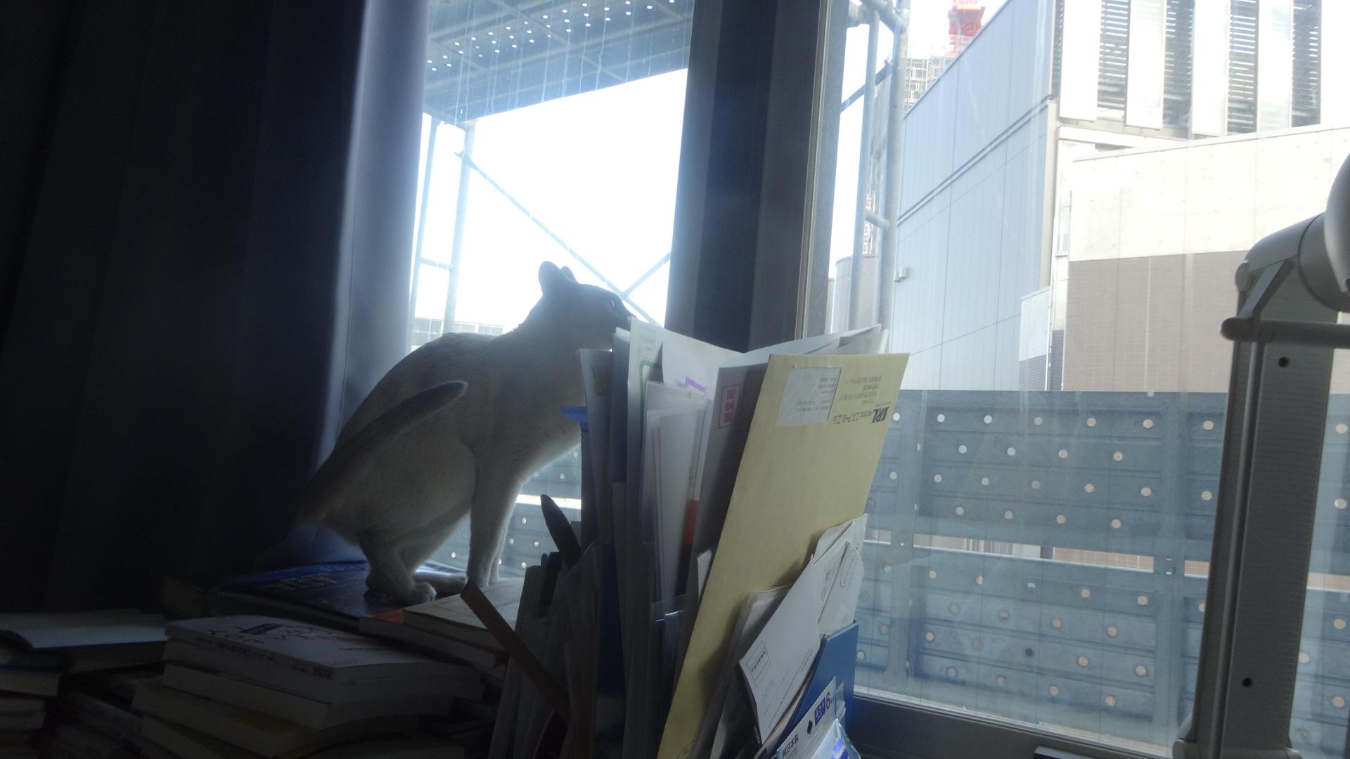 ローズがいなくなると同じ場所に陣取り外の工事の様子を見る楓