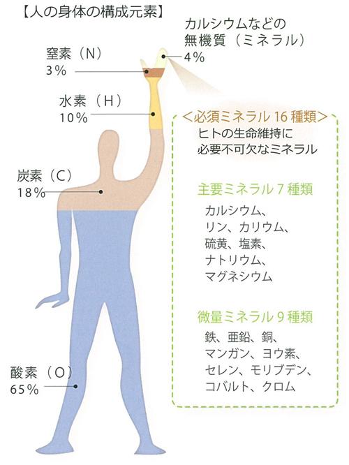 身体を構成する元素とミネラルの種類と量を示す図