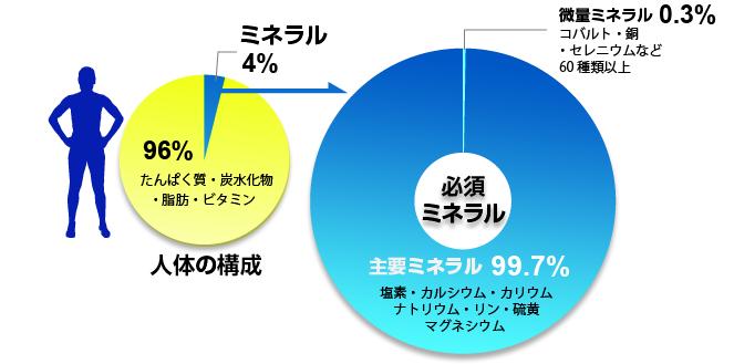 身体全体における主要ミネラル 微量ミネラルの量を示す図