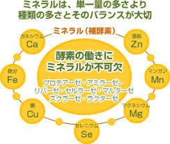 鉄 銅 モリブデンは補酵素として働くことを示す図