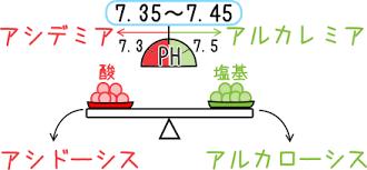 酸・塩基平衡について説明する図