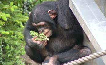 草を食べる猿の姿