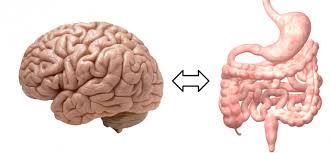 腸と脳でトレードオフが行われているさま