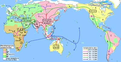 ミトコンドリアDNAが世界に広がる過程を示した図