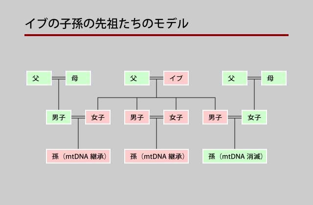 ミトコンドリアDNAは女系につながることを示した図