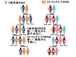 Y染色体の父性遺伝 ミトコンドリアDNAの母性遺伝を示した図
