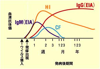 各種抗体の出現の時間経過を示すグラフ