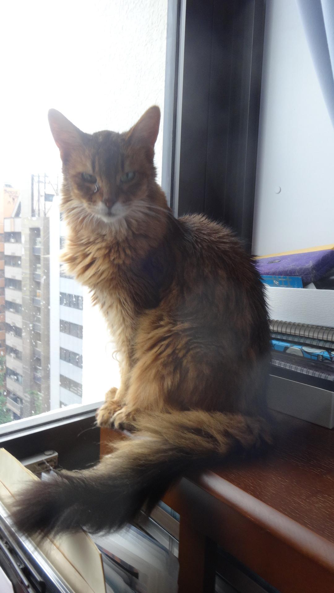 机の脇にある 少し背の高い書類棚の上に座るローズ