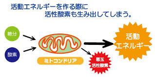 ミトコンドリアが活性酸素を産生する様子