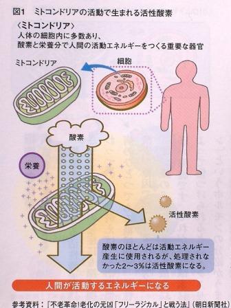 ミトコンドリアで利用される酸素の数%が活性酸素に変わることを示す図