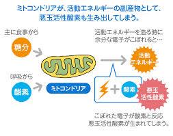 ミトコンドリアで活性酸素が産生されることを示す図