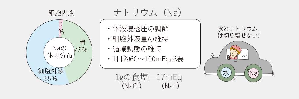 ナトリウムは細胞外液に多く存在することを示す図