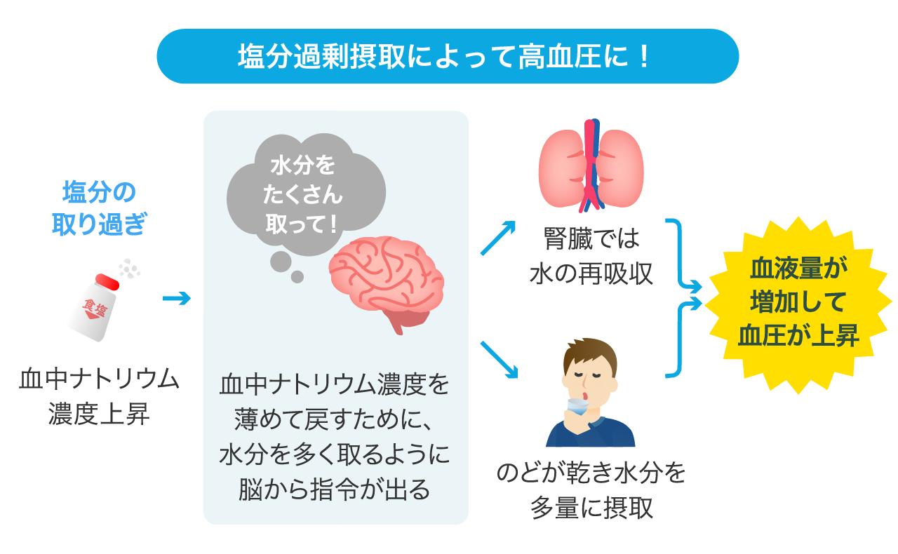 塩分を摂りすぎて 血中ナトリウム濃度が増加すると血圧が上がることを示す図