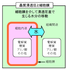 浸透圧について説明する図