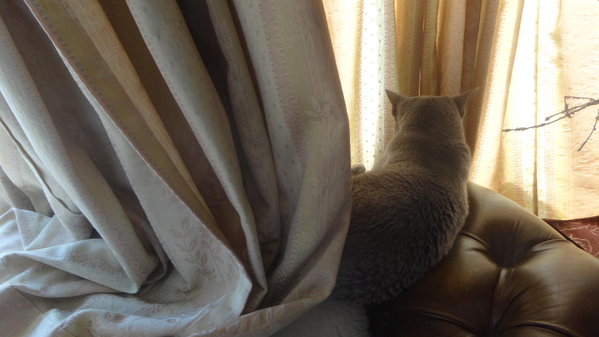 カーテンにくるまって寝ているデイジー