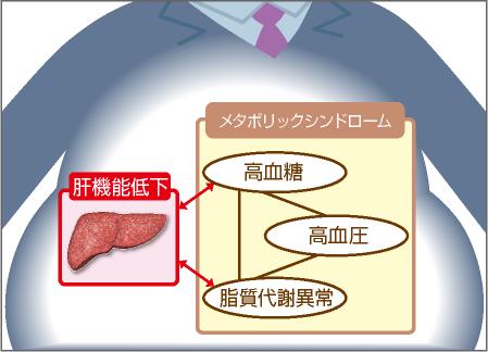 肝機能低下と生活習慣病の関連を示す図