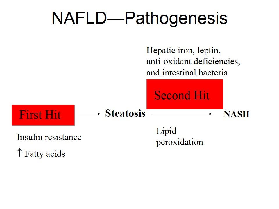 NAFLDの病態生理・1