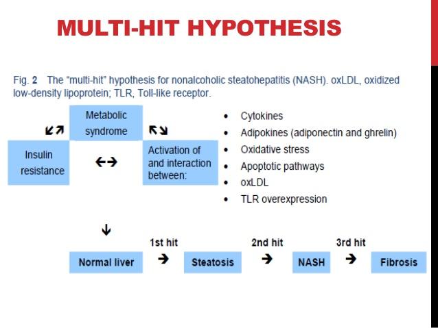 NASHの病態形成に関わるさまざまな因子をまとめた図