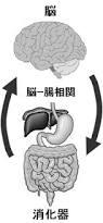 脳と腸の密接な関係
