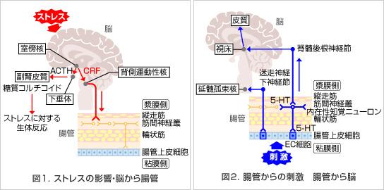 脳から腸管への情報伝達 腸管から脳への情報伝達の説明図