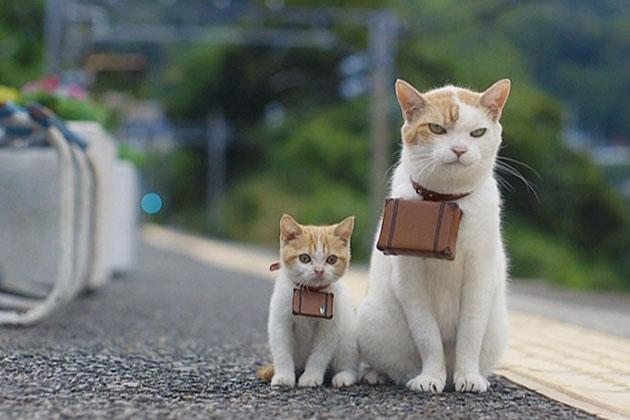 ネコブームに貢献した旅するネコのキャラクター