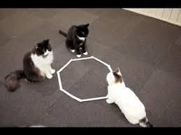 紐やテープで床の上に閉鎖されたワクに入る猫の姿2
