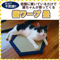 猫ワープ畳の写真