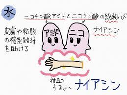 皮膚や粘膜の健康維持への関与を示す図