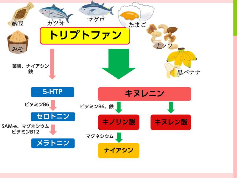 トリプトファンから合成される過程を示す図