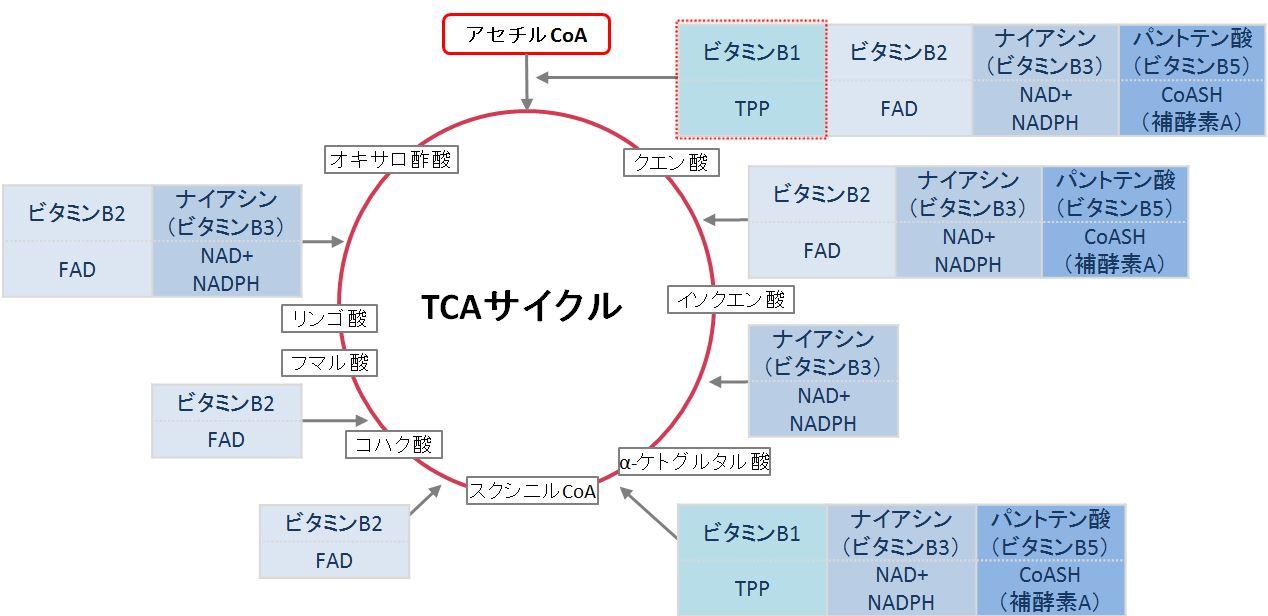 TCA回路で関与する反応を示した図
