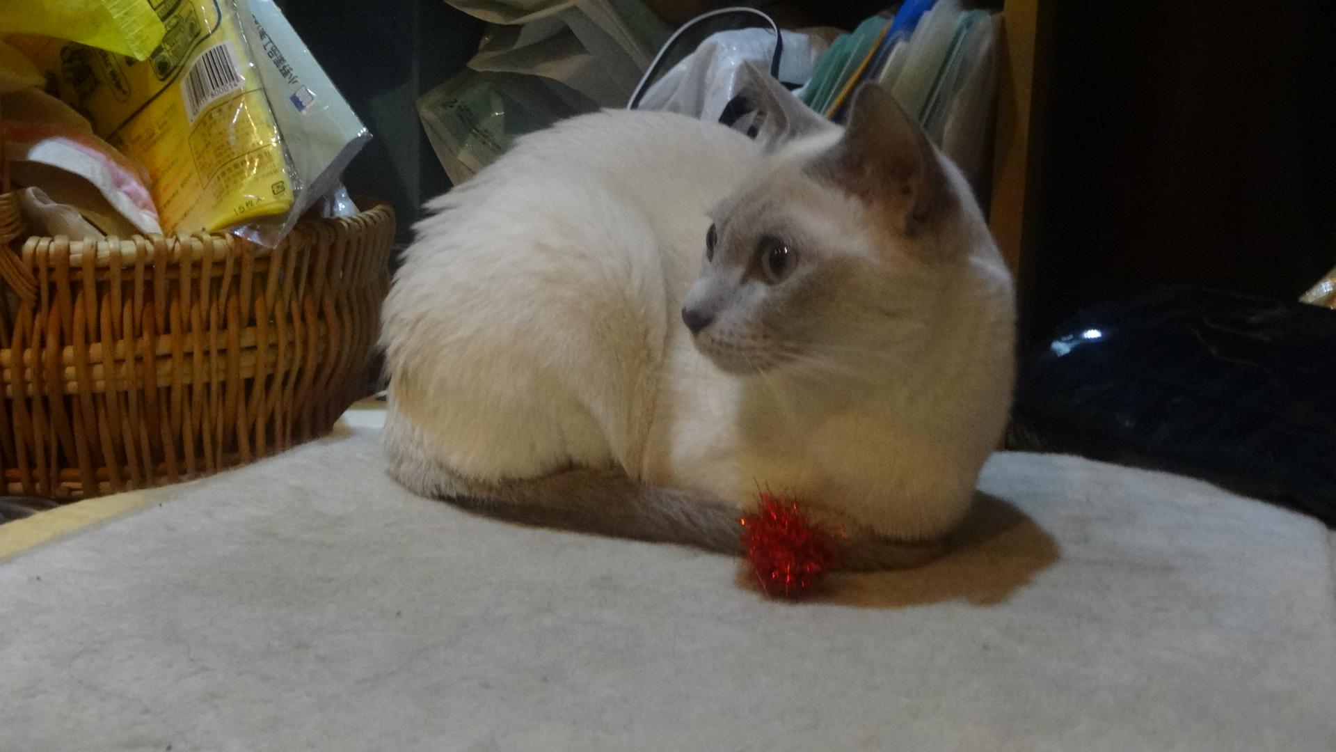 小さなキラキラボールを運ぶ楓