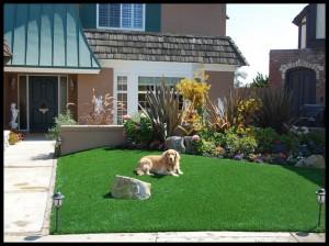 広い庭でくつろぐ大きな洋犬