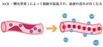 内皮型NOによる血管拡張作用の説明