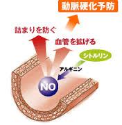 NOによる抗動脈硬化作用の説明