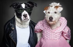 洋服を着たイヌの写真