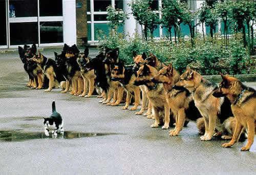 ネコの前で整列するイヌ