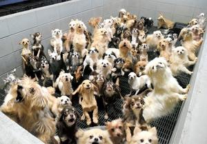 囲いに囲まれたたくさんのイヌ