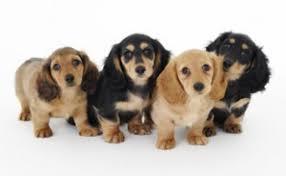 群れる犬の写真