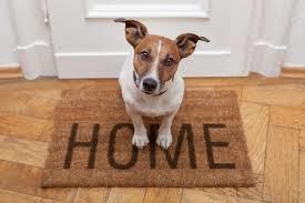 玄関でお座りしてご主人を待つ犬の姿