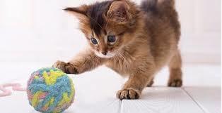 遊ぶネコの写真