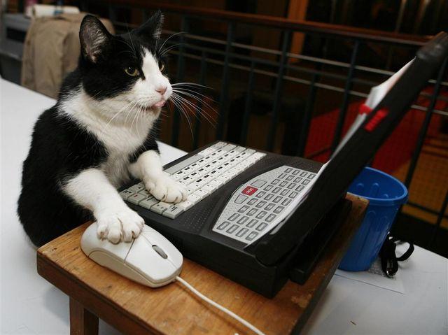 時代はネコ型を求める