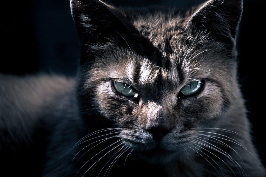 鋭く見つめるネコの姿