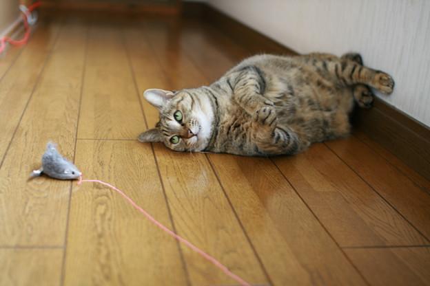 遊ぶネコの姿