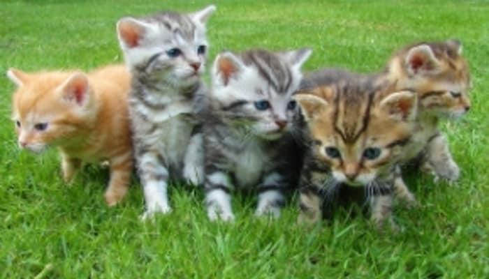 ネコ型人間から成るチームの写真