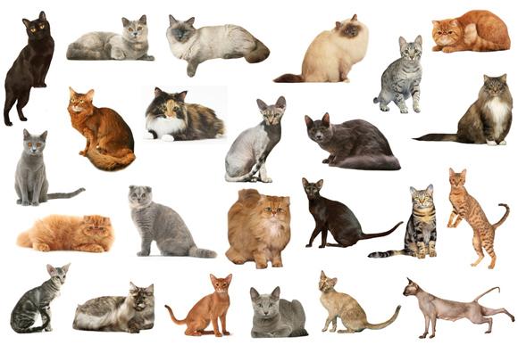 いろいろな種類の猫たちの写真